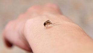 انتقال ایدز از پشه